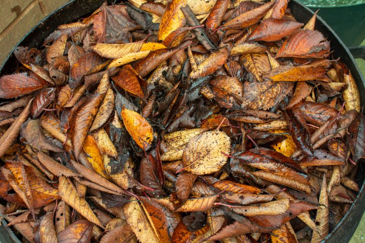 How do you COMPOST leaves at home?